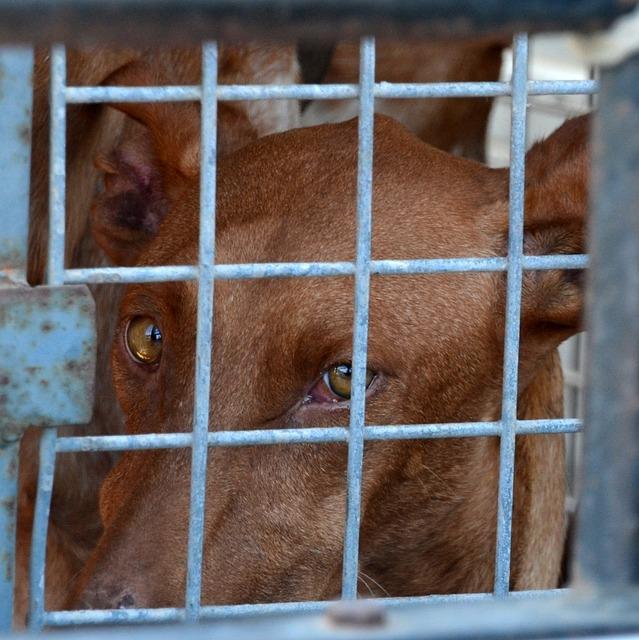 Speech on animal cruelty