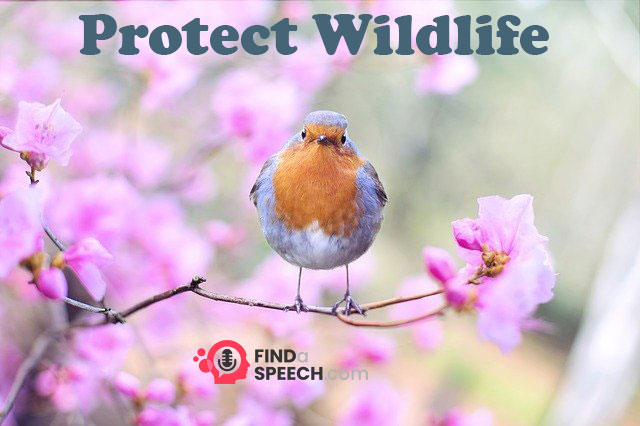 HS2 Woodland Protection